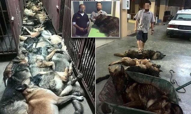 Dozens of Dogs `Killed by American Security Company in Kuwait after Its Contract with Oil Firm Ended`
