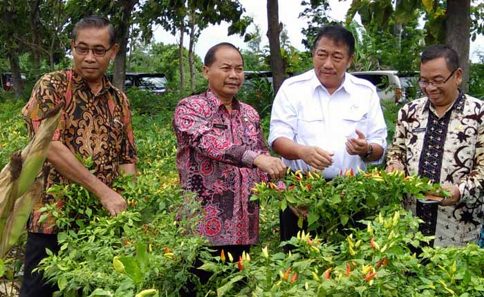 Indonesia Overproduction of Red Chilli 6,993 Tons in March 2017