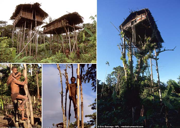 The Secretive Korowai Tribe Who Live above the Forest in Treehouses