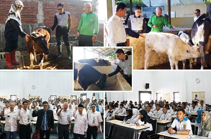 Indonesian Agriculture Ministry Chose Artificial Insemination