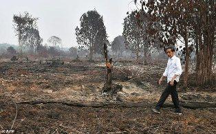 Jokowi Tegaskan Berupaya Keras Atasi Kebakaran Hutan dan Lahan