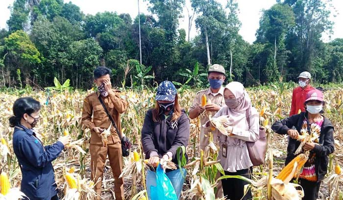 Tile Count Method for Calculate Indonesia`s Rice Harvest Area
