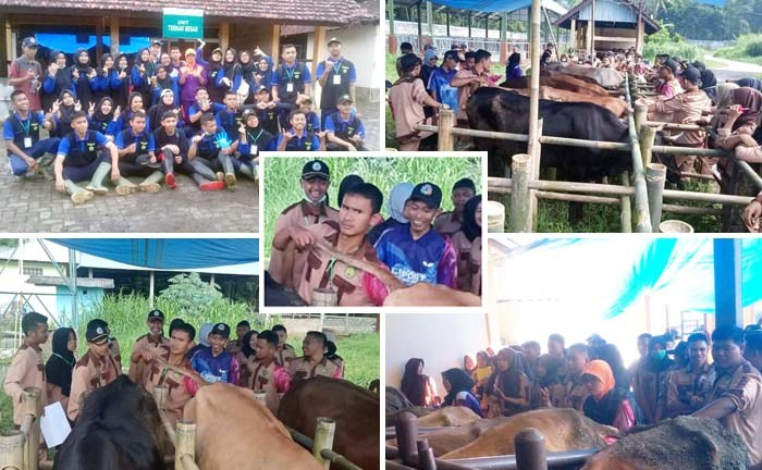 Artificial Insemination by Indonesian Students for Increase the Cattle Population