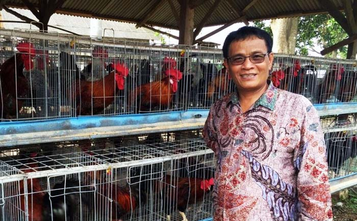 Indonesian Govt Calls Hoax about Chickens Given Growth Hormones