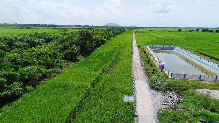 Indonesian Agriculture Focuses on Developing HR and Infrastructure