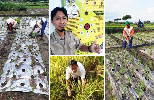 Indonesian Agriculture Anticipate Covid-19 by Weaker Health Systems