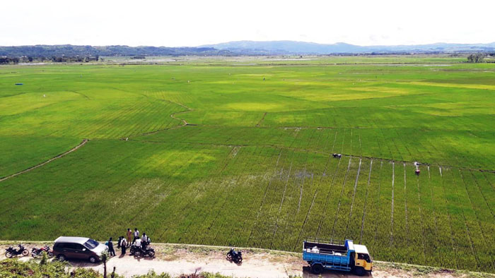 National Rice Production Exceeds the Indonesian Govt`s Target
