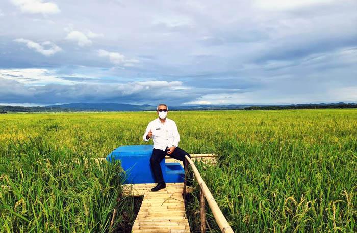 Berita Foto Kepala BPPSDMP Kementan di Food Estate Sumba Tengah